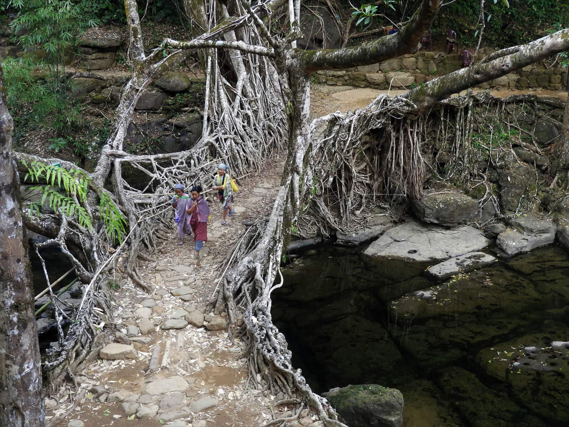 Pont Vivant en racine en Inde du Nord Est - Mawlynnong, Meghalaya