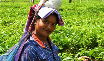 Tea Garden Tours in Assam, Northeast India