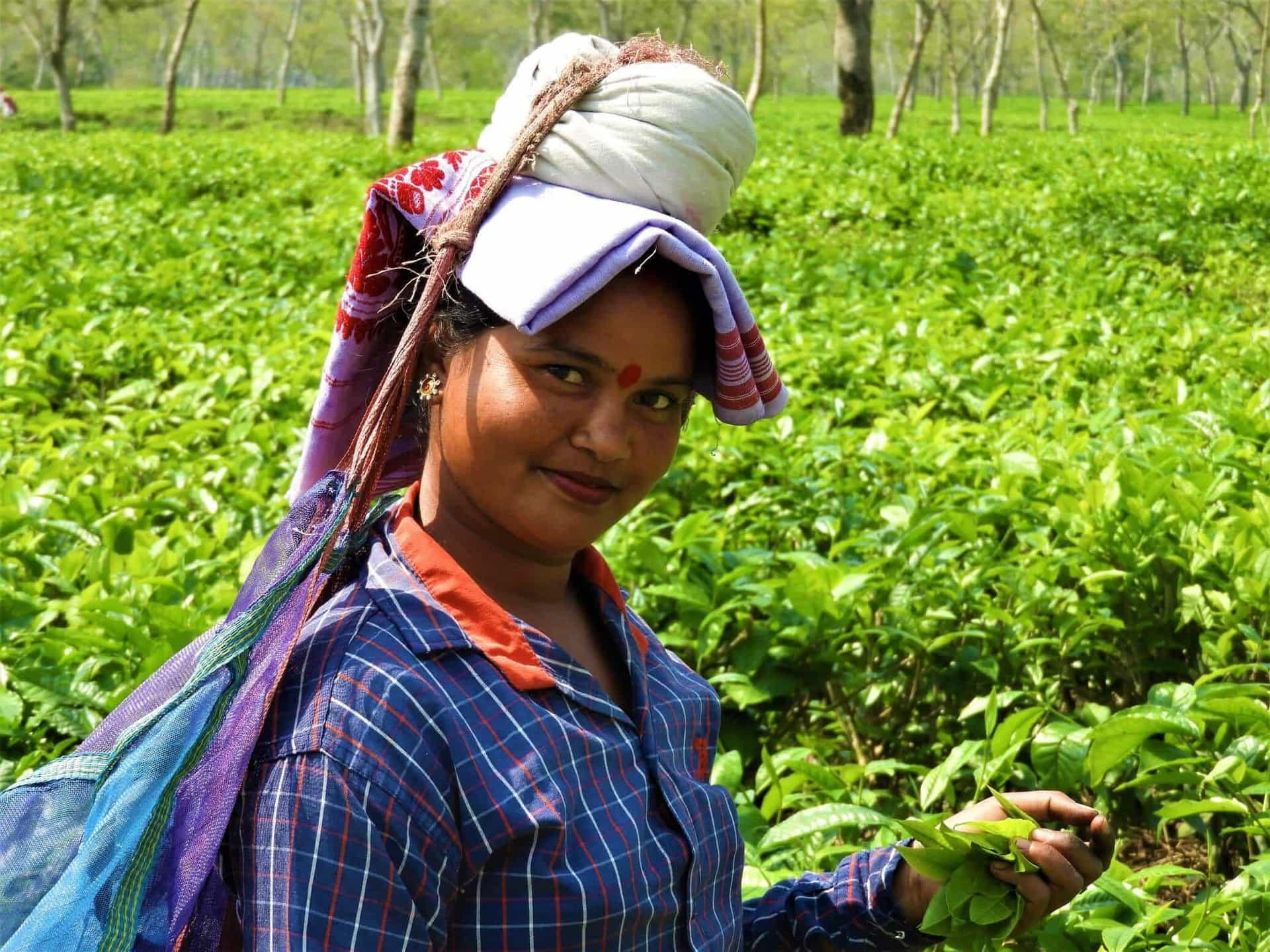 Tea Garden Tours in Assam, Northeast India