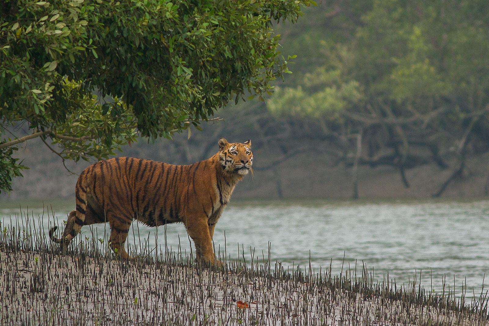 Animaux en Inde, où observer les animaux sauvages ?