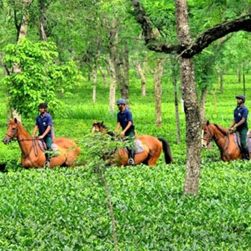 Horse Riding Holidays in Assam - Horse Riding Tours in North East India